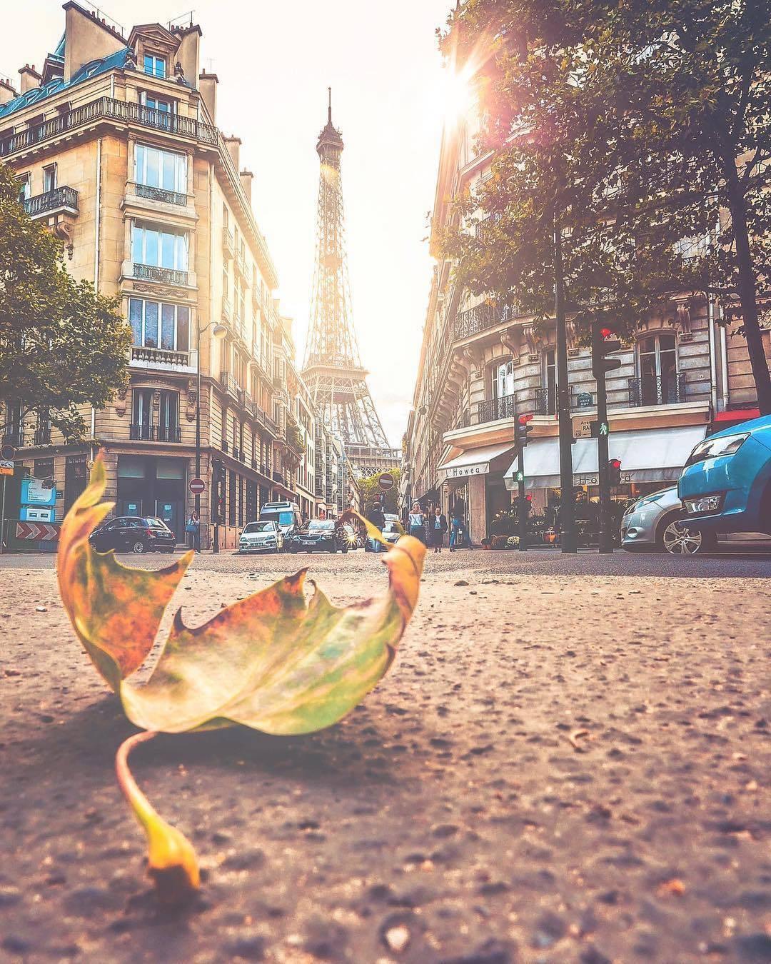 עלי שלכת - פריז